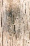Texturice la madera vieja, fondo de madera superficial sucio, madera dura Imágenes de archivo libres de regalías