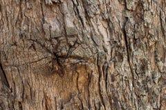 Texturice la superficie de madera natural de madera, ideal para los fondos y las texturas Fotos de archivo