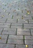 Texturice la trayectoria de las tejas de piedra con las hojas de otoño Imagen de archivo libre de regalías