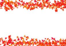 Texturice las hojas rojas de un arce tejido en una enhorabuena del carina del otoño del marco del encintado con un blanco Fotos de archivo