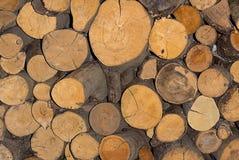 Texturice los anillos anuales dormidos redondos del fondo del pino del tronco de la leña del woodpile Fotos de archivo libres de regalías