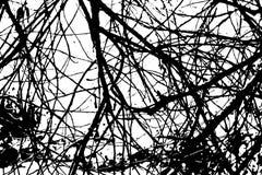 Texturisé rayé balayé par irregular abstrait Photos libres de droits