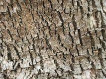 Texturizado cerca para arriba de corteza de árbol áspera Imagen de archivo libre de regalías