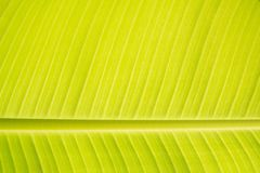 Texturs-Bananenblatt Lizenzfreie Stockfotografie
