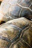 textursköldpadda arkivbild