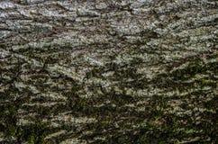 Texturskott av det bruna trädskället Arkivfoton