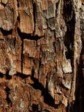1 texturträ Royaltyfria Foton