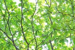 Texturträd Arkivfoto