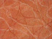 texturvägg royaltyfria foton