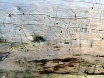Textuur 1 van het drijfhout Stock Afbeeldingen
