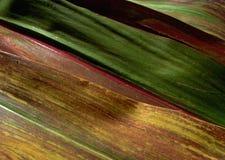 Textuur ..... 2 Stock Afbeelding