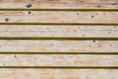Textuur, achtergrond, houtmuur, licht hout, pijnboom royalty-vrije stock foto