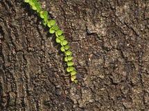 Textuur als boom Stock Afbeeldingen