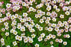 Textuur Bloemen Stock Fotografie