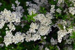 Textuur Bloemen Stock Afbeeldingen