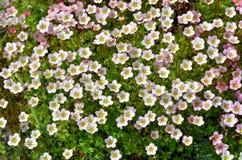 Textuur Bloemen Stock Foto