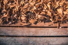 Textuur bruine bladeren op hout Het concept van de lente stock afbeeldingen