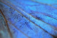 Textuur - detail van vlindervleugel Stock Afbeelding