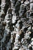 Textuur door ruwe schors van boom wordt gecreeerd die Royalty-vrije Stock Afbeelding