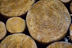 Textuur: een plak van een boom Stock Afbeelding