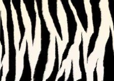 Textuur - een pluizige huid van een zebra Royalty-vrije Stock Afbeelding