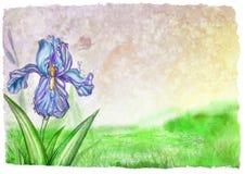 Textuur en bloeiende lilac iris vector illustratie