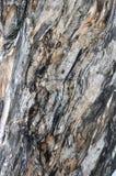 Textuur en kleur van Banian de oppervlakte van de boomboomstam Stock Foto's