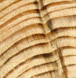 Textuur geel hout van naaldspeciessparren, pijnboom Het transversale knipsel van een zaag Royalty-vrije Stock Foto's