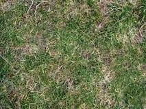 Textuur. Het gras van de winter Stock Afbeelding