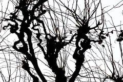 Textuur Isolant op witte achtergrond Zwart wit silhouet grafiek De takken van de boom met bladeren met bewolkt stock afbeelding