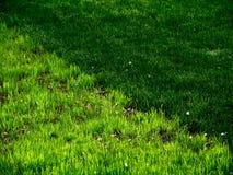 Textuur. Jong gras. Greens. Stock Afbeeldingen