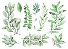 Textuur met greens, tak, bladeren, varenbladeren, gebladerte stock illustratie