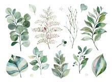textuur met greens, tak, bladeren, varenbladeren, gebladerte royalty-vrije illustratie