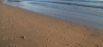 Textuur op het strand Stock Foto's