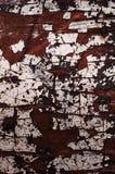 Textuur oude boom Stock Fotografie