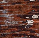 Textuur oude boom Royalty-vrije Stock Afbeeldingen