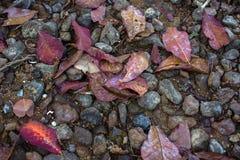 Textuur rode gevallen bladeren op het zand en stenen aan het overzees Royalty-vrije Stock Foto
