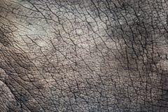 Textuur: Sluit omhoog Olifantstextuur Royalty-vrije Stock Afbeelding