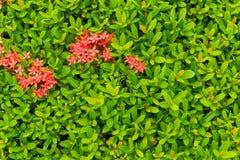 Textuur van aarbloem Stock Foto's