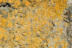 Textuur van beton, cement, oude mos behandelde achtergrond, royalty-vrije stock fotografie