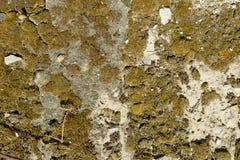 Textuur van beton, cement, oude mos behandelde achtergrond, stock afbeelding