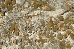 Textuur van beton, cement, oude mos behandelde achtergrond royalty-vrije stock foto