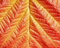 Textuur van blad Royalty-vrije Stock Fotografie