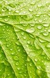 Textuur van blad met dalingen van water Stock Fotografie