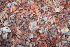Textuur van bladeren in de herfst royalty-vrije stock fotografie