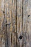 Textuur van boomboomstam Stock Afbeelding