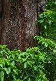 Textuur van boomboomstam en blad Stock Afbeeldingen