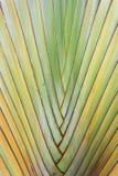 Textuur van boomschors Royalty-vrije Stock Foto's