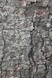 Textuur van boomschors Royalty-vrije Stock Afbeelding
