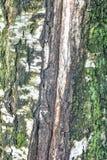 Textuur van boomschors met groen mos stock afbeeldingen